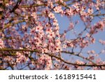 Beautiful Flowery Spring...