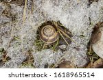 Shell With A Snail Lying In Th...