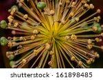 colorful flower burst | Shutterstock . vector #161898485