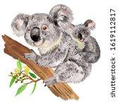 Illustration Of Mom Koala With...