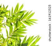 bamboo leaves on white... | Shutterstock . vector #161912525