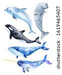 Sea Animals Isolated On White...