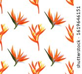 heliconia and strelizia flowers ... | Shutterstock .eps vector #1619646151