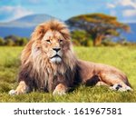 Stock photo big lion lying on savannah grass landscape with characteristic trees on the plain and hills in the 161967581