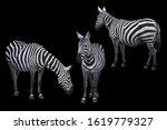 Zebra animal photo set isolated ...