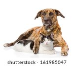Stock photo mixed breed dog hugging a cat isolated on white background 161985047