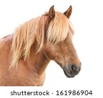 Stock photo portrait of beautiful horse with golden mane 161986904