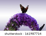 the macro photograph of two... | Shutterstock . vector #161987714