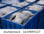Freshly Caught Fish Sorted In A ...