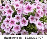 Beautiful Flowers With...