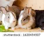 Two Young Rabbits Nibble On...