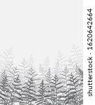 vector illustration of bracken. ... | Shutterstock .eps vector #1620642664