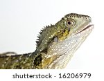 water dragon with mouth...   Shutterstock . vector #16206979