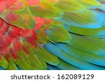 A Beautiful Bird Greenwinged...