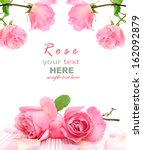 pink rose isolated on white... | Shutterstock . vector #162092879