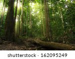 nature rain forest with morning ... | Shutterstock . vector #162095249