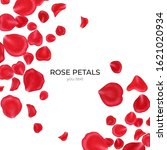 red rose petals isolated on... | Shutterstock . vector #1621020934