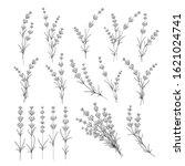 set of lavender flowers... | Shutterstock .eps vector #1621024741