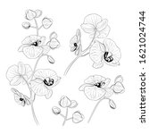set of tropical orchid flowers... | Shutterstock .eps vector #1621024744