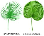 palm leaves watercolor... | Shutterstock . vector #1621180531