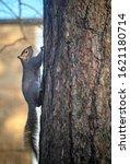 Grey Squirrel In Kelsey Park ...