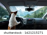 Trip With A Dog In The Car....