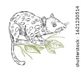 vector stock illustration with... | Shutterstock .eps vector #1621230514