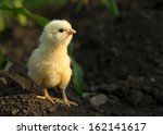 concentrated little yellow... | Shutterstock . vector #162141617