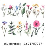 botanical set of wild flowers... | Shutterstock . vector #1621757797