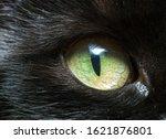 Cats Green Eye Close Up. Black...