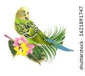 Green Parakeet Budgerigar  Hom...