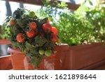 Home Growing Vegetables In...