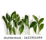 Flowers With Leaves Lily Of Th...