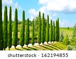Hill Of Tuscany With Vineyards...