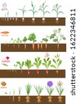set of life cycles of vegetable ... | Shutterstock .eps vector #1622346811