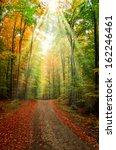 autumn forest | Shutterstock . vector #162246461