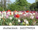 Flower Meadow With Red And...