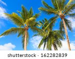 Three palm trees against a blue sky