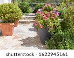 Planter With Pink Geranium...