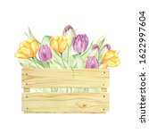 Watercolor Illustration Tulips...
