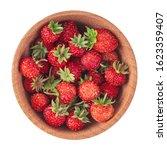 heap of wild strawberries in... | Shutterstock . vector #1623359407