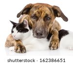 mixed breed dog and cat lying... | Shutterstock . vector #162386651