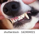 dog teeth 26 | Shutterstock . vector #162404021