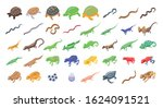 Reptiles And Amphibians Icons...