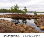 bog landscape with red mosses, small bog pines, small bog lakes and wind moving water