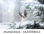 Dog In The Winter In The Snow....