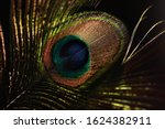Peacock Feather Isolated On...