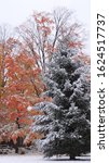 An October snow leaves the maple tree with color still on in southern Wisconsin.