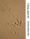 Footprints Of A Gull In The...