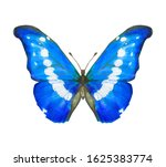 Hand Drawn Watercolor Butterfly ...